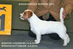 benelux_winner_mouts_2014_017__3_